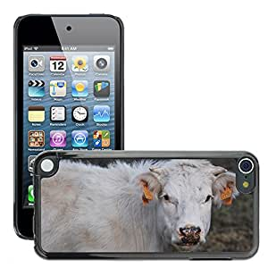 Hot Style Cell Phone PC Hard Case Cover // M00130269 Cow Animals Nature Animal // Apple ipod Touch 5 5G 5th