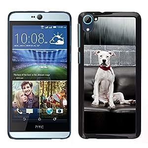 TopCaseStore / la caja del caucho duro de la cubierta de protección de la piel - White American Pit Bull Terrier Dog Breed - HTC Desire D826
