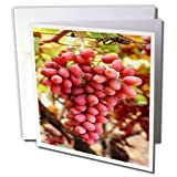 3dRose TDSwhite – Farm and Food - Food Red Grapes Fresh Vineyard - 12 Greeting Cards with Envelopes (gc_285169_2)