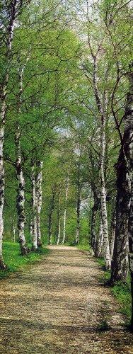 Brewster 2-1402 Birch 2-Part Door Mural, 2-Foot 10-Inch by 6-Foot 10-Inch