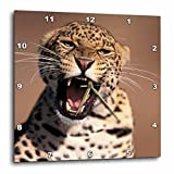3dRose dpp_84667_1 Africa, East Africa African Leopard, Captive NA02 SWE0027 Stuart Westmorland Wall Clock, 10 by 10-Inch
