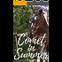 Comet in Summer