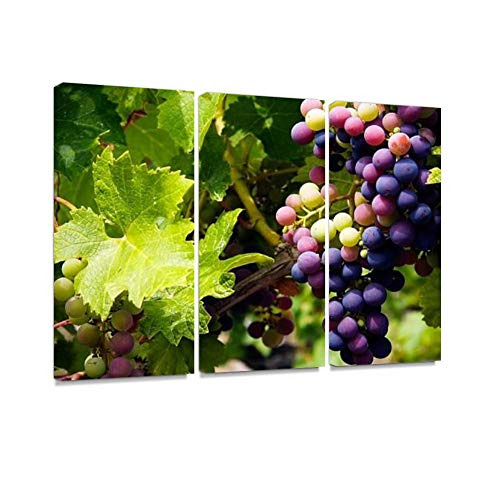 Vine Print On Canvas Wall Artwork Modern Photography Home Decor Unique Pattern Stretched and Framed 3 Piece