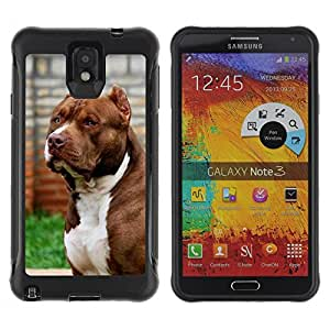 King Case@ Pit-Bull American Dog Boston Terrier Canine Rugged hybrid Protection Impact Case Cover For Note 3 Case ,N9000 Leather Case ,Leather for Note 3 ,Case for Note 3 ,Note 3 case