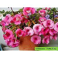 Plantogallery™ Flower Bulbs | Achimenes Bulbs | for Basket Flower | Pot and Home & Garden |