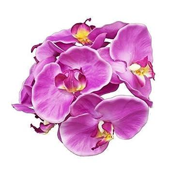Amazon De Kunstblumen Orchideenbluten Phalaenopsis Diana Bundel 6er