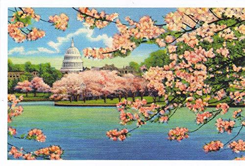 (PATAM -11 CAPITOL SEEN THROUGH CHERRY BLOSSOMS, WASHINGTON, D.C. - Vintage postcard reprint, 1941 [[ 6