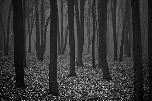 秋の壁紙-自然の壁紙-#4311 - 白黒の キャンバス ステッカー 印刷 壁紙ポスター はがせるシール式 写真 特大 絵画 壁飾り75cmx50cm