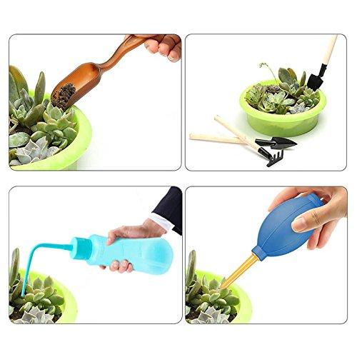 G2PLUS Transplantation Succulente parfait pour une Succulente amateurs de jardinage outils 13/pcs Mini outils /à main de jardin