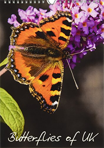 Natural Dalyn (Butterflies of UK 2018: Some of Our More Colourful UK Butterflies (Calvendo Animals))