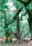 BaumWeisheit: Ein Dialog zwischen Mensch und Baumwesen