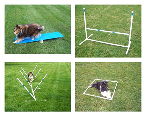 Dog Agility Course - 7