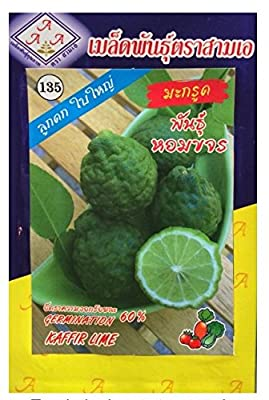 Thai Organic Kaffir Lime Seed Sam A Brand. Pack of 3.