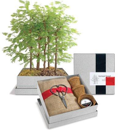 Dawn Redwood Bonsai - Potting Shed Creations Bonsai Box - Dawn Redwood