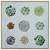 Nine Succulent Print in Birch Floater Frame, 38''x 38''