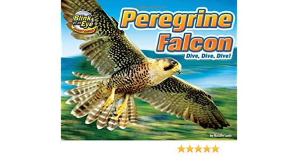 Peregrine Falcon Dive Dive Dive Blink Of An Eye Superfast Animals Lunis Natalie Jenny J Peter 9781936087938 Amazon Com Books