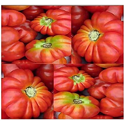 Brandywine Pink Tomato Seeds - Heirloom - Up to 1 LB ~ Huge Fruit with Exotic Fl : Garden & Outdoor