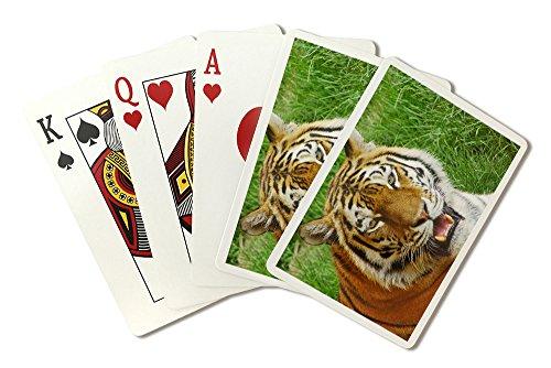Bengal Tiger Up Close (Playing Card Deck - 52 Card Poker Size with Jokers) Bengal Tiger Close Up