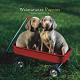 Weimaraner Puppies 2008 Mini Wall Calendar (German, French, Spanish and English Edition)