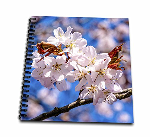 cherry blossom drawing book - 8