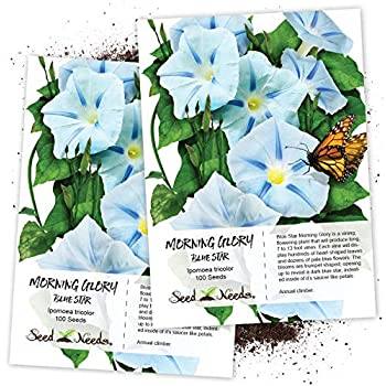 Amazon com : Seed Needs, Milky Way Morning Glory (Ipomoea
