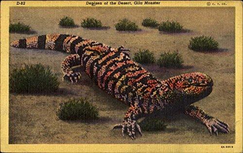 Denizen Of The Desert Gila Monster Other Animals Original Vintage Postcard from CardCow Vintage Postcards