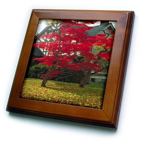 3dRose TDSwhite - Miscellaneous Photography - Pretty Foliage Tudor Home - 8x8 Framed Tile (ft_285426_1) ()
