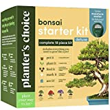 Bonsai Tree Growing Kit - Grow 4 Indoor Bonsai