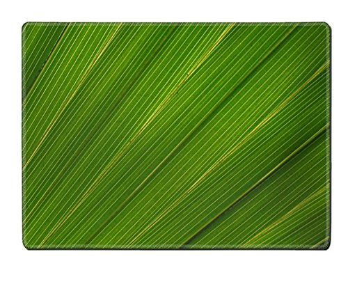 [MSD Placemat IMAGE ID 20067423 Big green striped leaf from a palm tree] (Palm Frond Placemat)