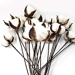 WsCrafts 20-Pack Really Natural White Dried Cotton Balls - 1 Balls per Stem - 13inch Cotton Stems Farmhouse Decoration Floral Picks - Rustic Style Vase Filles 47