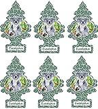 Little Trees Car Air Freshener 6-Pack (Eucalyptus)