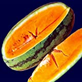 buy Orangeglo Watermelon 20 Seeds-Tropical Fruit Punch Tang now, new 2018-2017 bestseller, review and Photo, best price $2.99