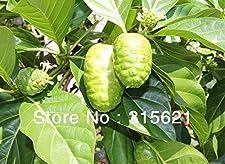 Noni Seeds Delicious Fruit Morinda Citrifolia