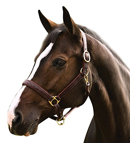 HDR FANCY PADDED ROLLED THROAT TRIPLE STITCHED HALTER - HAVANA - (Halter Plate)