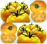 GOLDEN JUBILEE Tomato Seed - HEIRLOOM - SWEET & JUICY ~ Very Low acid content - 80 Days (00150 seeds - 150 Seeds - Pkt. Size)