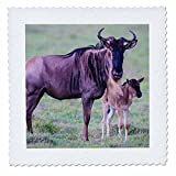 3dRose Danita Delimont - Animals - Africa. Tanzania. Wildebeest and baby in Serengeti National park. - 18x18 inch quilt square (qs_276578_7)