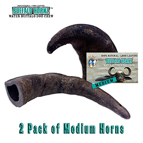 - 2 Pack of Buffalo Hornz Medium Long Lasting 100% Natural Water Buffalo Horn Dog Chews