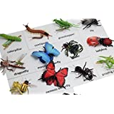 Montessori Insect Animal Match Cards and Figurines. Nomenclature Science Work