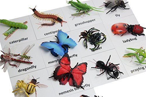 Montessori Insect Animal Match Cards and Figurines. Nomenclature Science Work ()