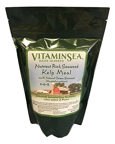 Organic Kelp Meal Fertilizer Plant - Garden 1 lb bag USDA Certified Seaweed | Atlantic Ascophyllum Nodosum is Hand Harvested off Maine Seacoast for Turf & Grass Builder | Indoor or Outdoor (Meal 1lb)