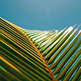 Palm Leaf in the Sun Peel and Stick Wall Mural