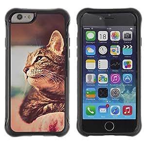 Suave TPU GEL Carcasa Funda Silicona Blando Estuche Caso de protección (para) Apple Iphone 6 PLUS 5.5 / CECELL Phone case / / Ocicat Chausie Savannah Cat Shorthair /