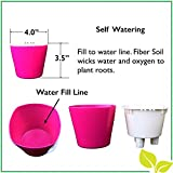 Self Watering Mini Planter Pots (3 Pack-BLACK) Grow a Indoor Window Sill Garden. Perfect for Potting Smaller House Plants, Herbs, African Violets, Succulents, Flowers or Start Seedlings.