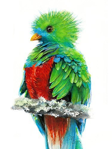 - Paradise Bird Nursery Print Quetzal Watercolor Giclee Print