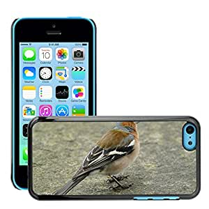 Super Stella Slim PC Hard Case Cover Skin Armor Shell Protection // M00146314 Chaffinch Plumage Drawing Bird // Apple iPhone 5C