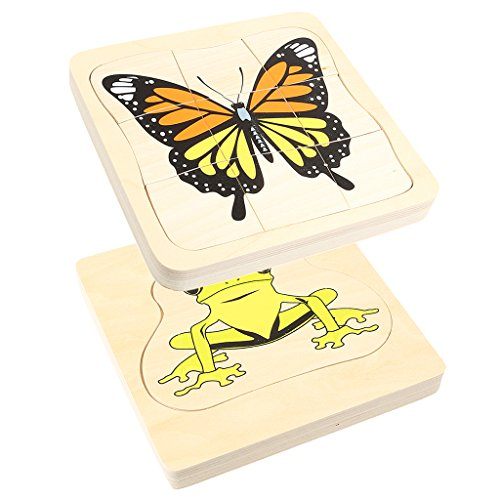 Dovewill Children Montessori Educational Toys the Evolvement of Frog/Butterfly Brain Teaser Wooden ()