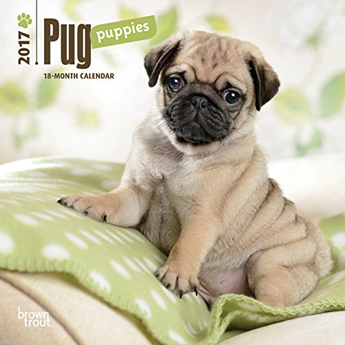 Pug-Puppies-2017-Mini-Calendar-7-x-7in