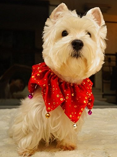 Dog Holiday Costumes (Bling Pet Holiday Accessories Dog Christmas Collar With Bells, Large)