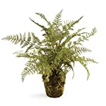 CONSERVATORY-SOFT-FERN-DROP-IN-13