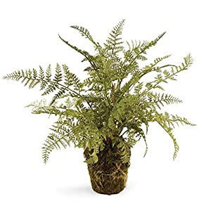"CONSERVATORY SOFT FERN DROP-IN 13"" 19"